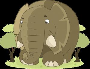 Živali slon