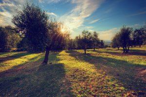 Drevesa v sončnem zahodu.